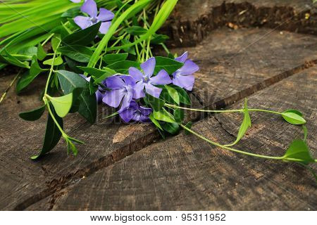 Flowers And Leaves Of The Periwinkle