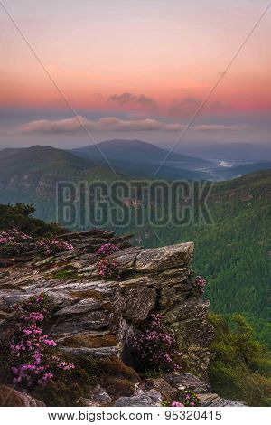 Rhododendron Spring Bloom in Linville Gorge 5