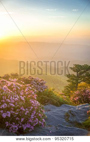 Rhododendron Spring Bloom in Linville Gorge 6