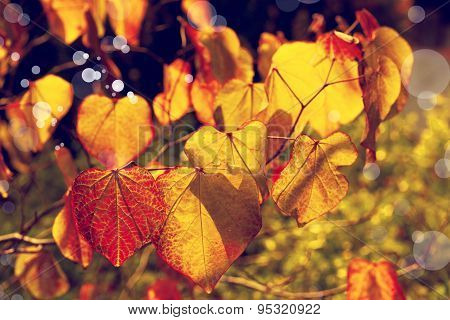 yellow autumn leaves background, very shallow focus, macro photography