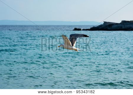 One seagull flying over the sea