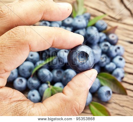 Blueberry in the man's hand. Blueberries over old wooden table in the background.