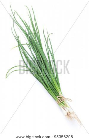 Fresh garden herbs. Spring onion. Isolated on white background