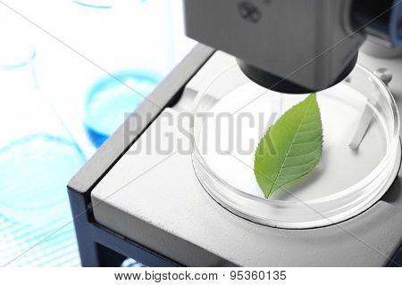 Green leaf in microscope close-up