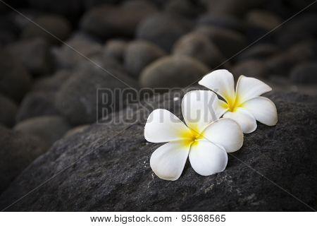 Exotic white flowers on the dark grey stone. Wellness and harmony symbol