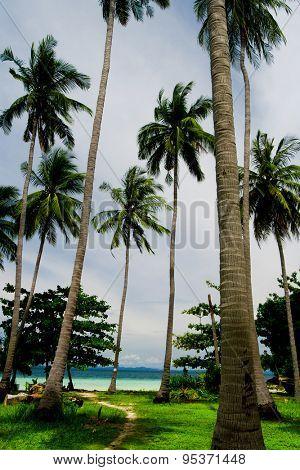Coconut Getaway Coast