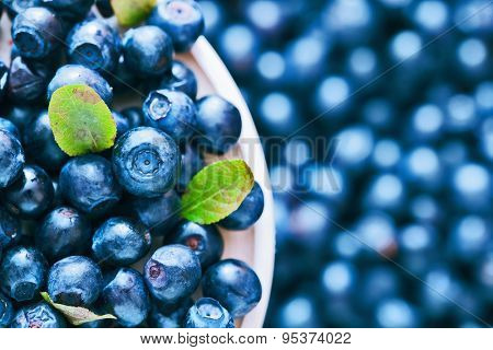 Wild berry. Blueberries in a saucer closeup