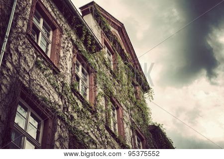 Low Angle View of Vine Covered Building Facade Underneath Dark Grey Rain Clouds