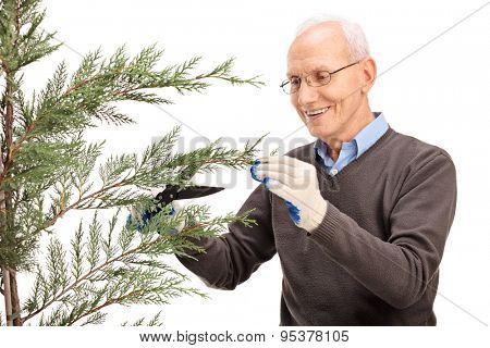 Cheerful senior man trimming the branches of a coniferous tree and smiling isolated on white background