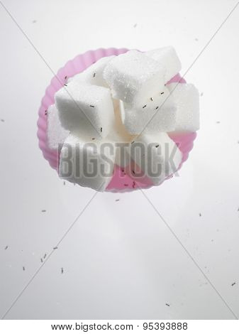 cube sugar in cup cake mold surrounded with ants