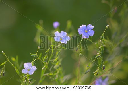 Beautiful tiny summer blue flowers