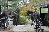 image of carriage horse  - Horses and carriages tied to fence in Amish Country Ohio - JPG