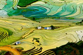 picture of rice  - Beautiful landscape about terraced rice field in Laocai province - JPG