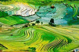 foto of rice  - Beautiful landscape about terraced rice field in Laocai province - JPG