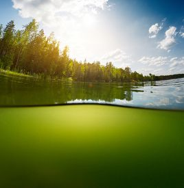 picture of bottomless  - Split shot of the freshwater pond with forest above the surface and glare blank background underwater - JPG
