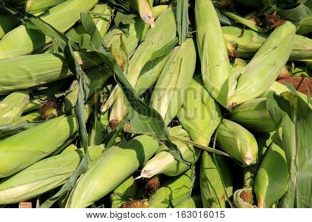 Local farmers market with several ears of corn on table