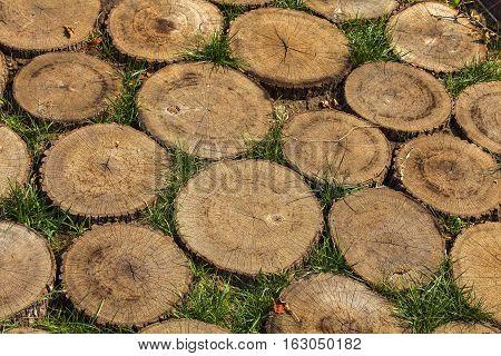 sawed wooden stumps texture / stumps texture