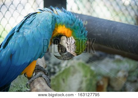 yellow and blue parrot in the cage in the zoo