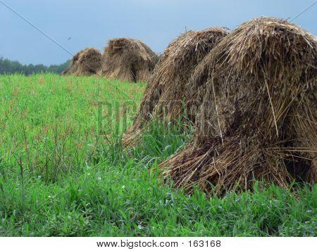 Haystacks 5