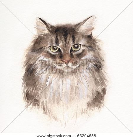 Serious cat. Watercolor illustration. Fluffy Kitty. Pet illustration.