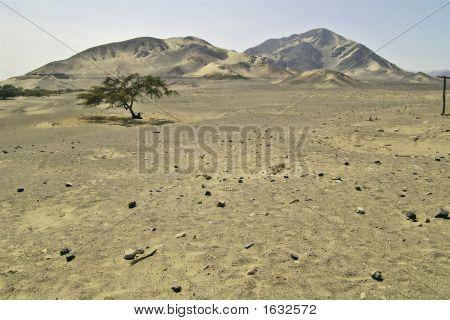 Nasca Burial Grounds