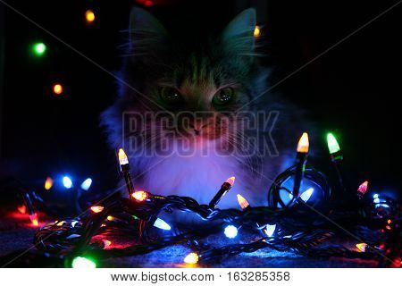 This is an unique photo of a kitty surrounded by christmas tree lights. It is a perfect picture to be used in marketing for winter ads or as a wallpaper.
