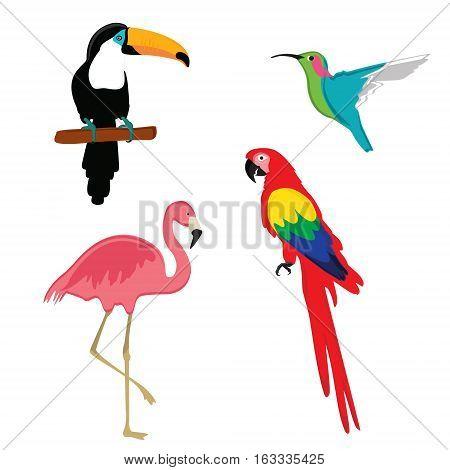 Vector illustration pink flamingo macaw parrot toucan and humming bird. Exotic bird set.