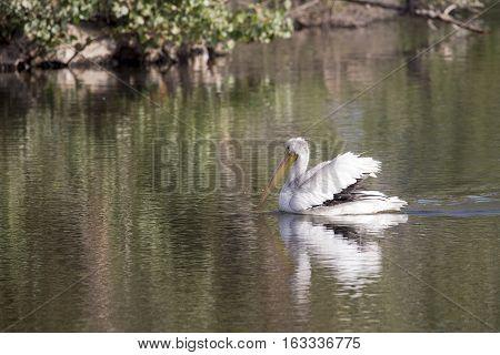 Bird swimming on lake - Black and White