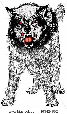 Vector Illustration of a very angry ferocious wolf.