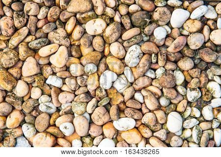 wet Small pebbles or stone or rock in garden.