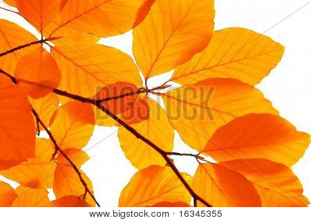 yellow leaf background close up