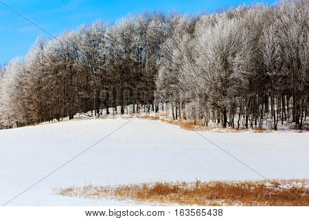 Hoar frost covered woods next to a snow covered field.