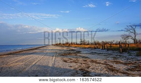 Sand, steppe grass and dried trees on seacoast. Coast Kinburn Spit. Ukraine