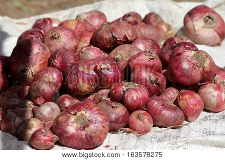Onions at the market of Debark in Ethiopia