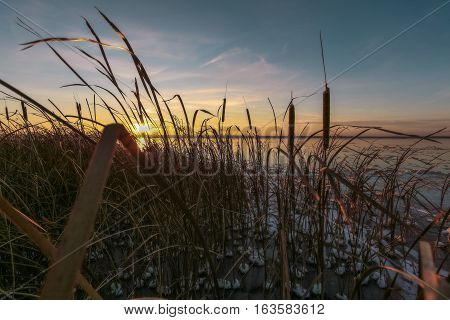 dry cane in ice and snow against the background of setting the sun on a winter decline