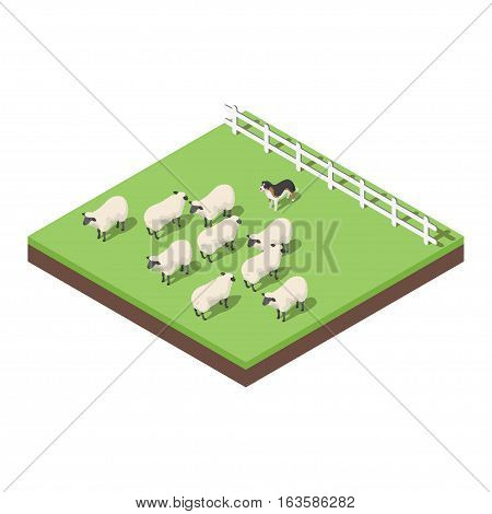 Isometric 3d vector illustration of farm animals. A dog herding the sheep. Icon for web. Isolated on white background.
