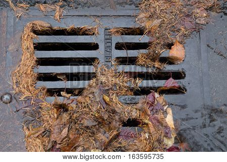 Tree leaves and needles clogging a street drain