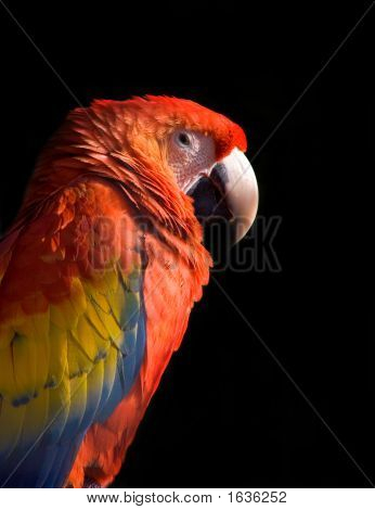 Animal Macaw_02