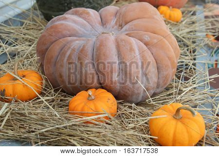 odd shaped pumpkin gourd on a bed of hay with mini pumpkins