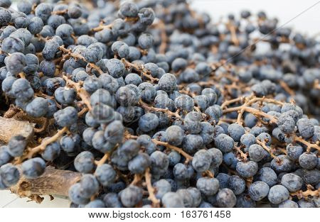 Extreme closeup of dry blueberries. Shallow depth of field.
