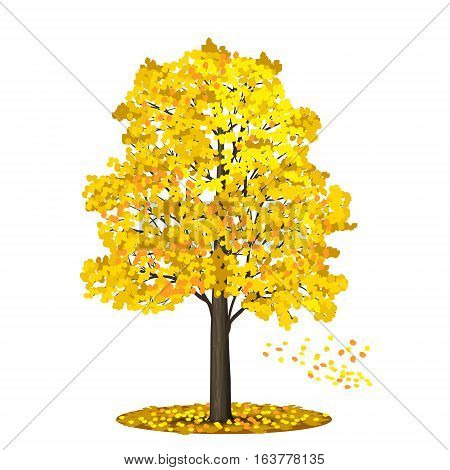 detached tree linden with leaves on a white background