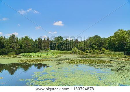 Landscape With Big Pond