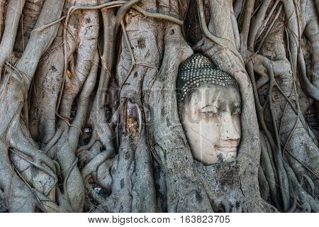 Head of Buddha statue in the tree roots at Wat Mahathat temple Ayutthaya Thailand useful for religious and travel concepts