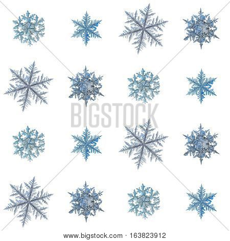Set with snowflakes isolated on white background, arranged in square grid. This is macro photos of real snow crystals: large stellar dendrites with long, ornate arms and fine symmetry.