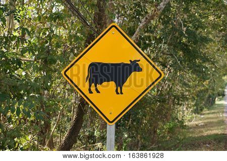 Cow crossing road sign beside the road