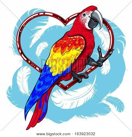 vector illustration of bright colorful bird red parrot with yellow and blue wings in the red heart on a background of white feathers