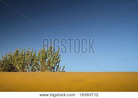 Desert And Bush