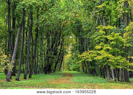 beautiful park with nice promenade path and high green trees and bushes