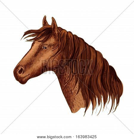 Vector portrait of brown purebred graceful hosrse mare. Beautiful bay mustang with wavy mane and calm kind looking eyes. Racehorse stallion resting in relax