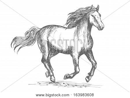 Horse racing sport sign. White mustang stallion in fast gallop run. Vector sketch symbol for horserace club, bet bookmaker. Horse mare galloping in wild freedom
